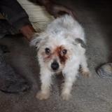 Sally. adoptee, Chien chien courant espagnol, kishu à adopter