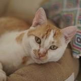Odana, Chat à adopter