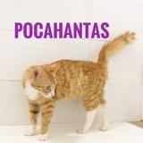 Pocahontas (à adopter avec bleuette), Chaton à adopter