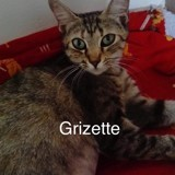 Grizette, Chaton à adopter