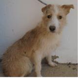Sancho, Chien à adopter
