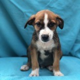 Gribouille, Chiot à adopter