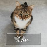 Lou, Chat européen à adopter