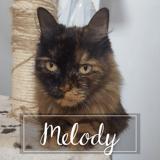Melody, Chat européen à adopter