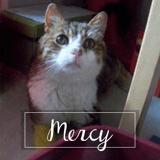 Mercy, Chat européen à adopter