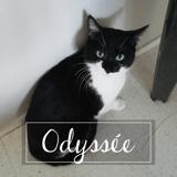 Odyssee, Chat européen à adopter