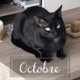 Octobre, Chat européen à adopter