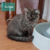 Eclipse, Chaton à adopter