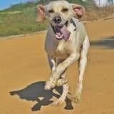 Huesos, Chien à adopter