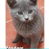 Pandore, Chaton à adopter