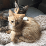 Canelle, Chaton à adopter