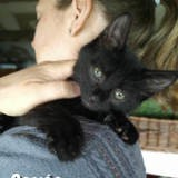 Persée, Chaton à adopter