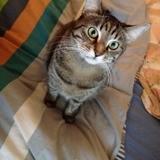 Lisa, Chat à adopter