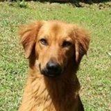Pepper, jeune chien croisé non lof, Chien à adopter
