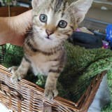 Pomme, Chaton à adopter
