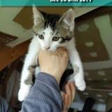 Pacman, Chaton à adopter