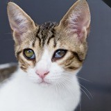 Crapouille, Chaton à adopter