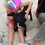 Perle, chiot femelle créole, Chiot à adopter