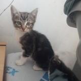 Piwi, Chaton à adopter
