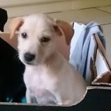 Pongo, Chiot à adopter