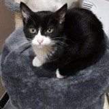 May, Chaton à adopter