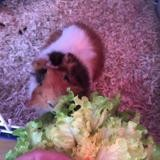 Clint, Animal à adopter