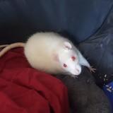 Aela et gaia, Animal à adopter