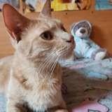 Caramel, Chat à adopter