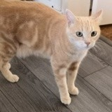 Houfie, Chat à adopter