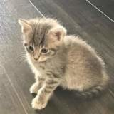 Bloom, Chaton à adopter