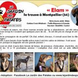 Elam, Chiot berger belge, golden retriever à adopter
