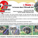 Nato, Chiot berger belge, golden retriever à adopter