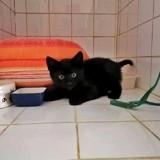 Dewey, Chaton à adopter
