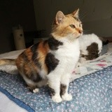 Inaya, Chat à adopter
