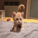 Oen, Chaton à adopter