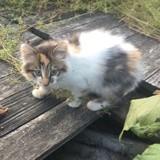 Kaelia, Chaton à adopter