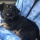 Laya, Chien à adopter