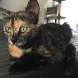 Mamoune, Chat européen à adopter