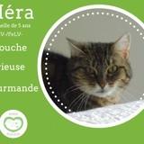 Héra, Chat à adopter