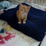 Pongo, Chaton à adopter