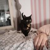 Oscar, douceur aux yeux émeraude, Chat à adopter