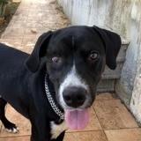 Rusty, chien mâle borgne croisé créole, Chien à adopter