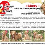 Marty, Chiot berger belge, golden retriever à adopter