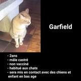 Garfield, Chat à adopter