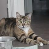 Kida, Chat à adopter