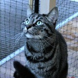 Pluton, Chat à adopter