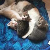 Sulli, Chaton à adopter