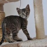Poumba, Chaton à adopter
