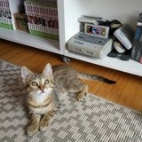 Pirouette, Chaton à adopter