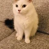 Pookie, un chaton modèle, Chaton à adopter